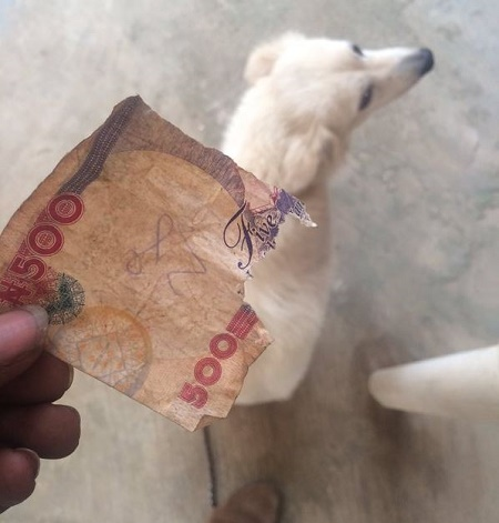 Hilarious: Man Offers His Dog To Calabar People After It Ate His N4000 (Photo)