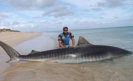 largest hammerhead shark - photo #7