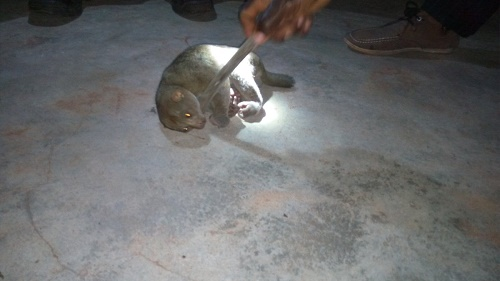Omg! See the African Bush Baby a Man Killed that Everyone ...