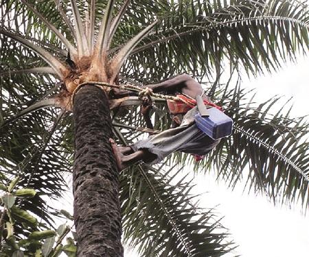 Ritualists Attack Imo palm wine tapper, cut off head, genitals