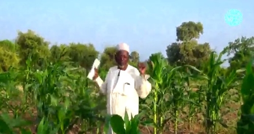 Bread Baking, Farming & More: Boko Haram Releases Video Showing the Life Inside Sambisa (Watch)