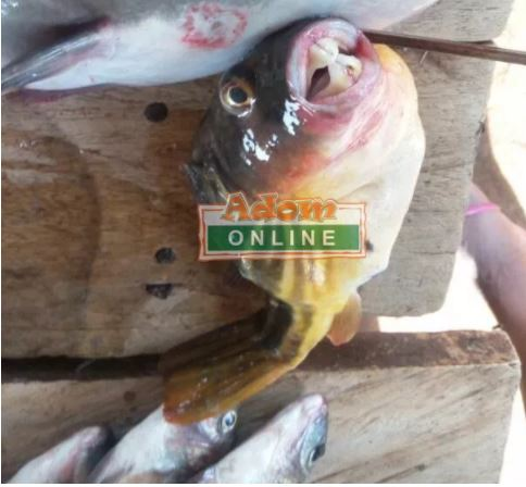 Oh No! See the Strange and Poisonous Fish Three People Ate and Died (Photos)