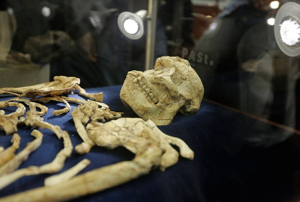 These 3.7 Million-year-old Bones Have Made a Very Interesting Revelation About Apes (Photos)