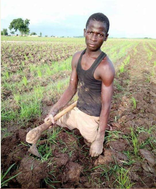 So Touching: Crippled Man Working on His Rice Farm in Zamfara