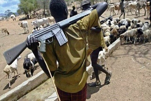 Fulani Herdsman Commits Suicide After 200 of His Cows Died of Hunger in Benue