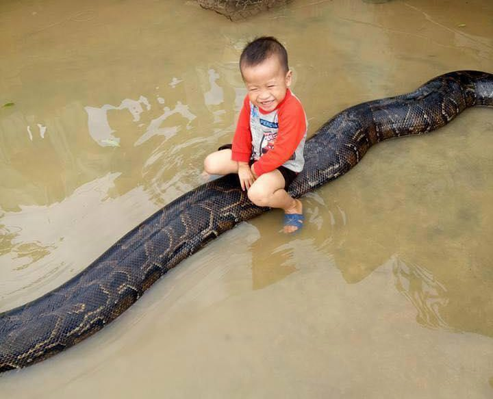3-year-old Boy Caught Riding a Massive 20-ft Python in the Water During Floods