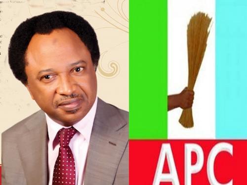 Fumigate Hyenas, Jackals in Your Cabinet Now - Senator Shehu Sani Tells Buhari