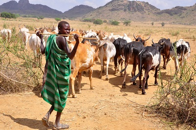 FG to Provide Insurance Cover for Ranch Operators - Audu Ogbeh