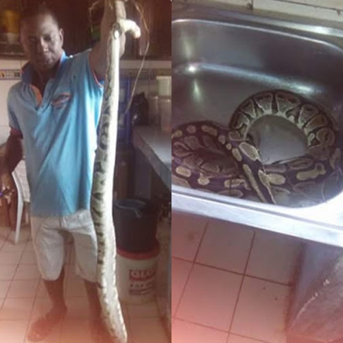 See the Moments a Man Killed a Big Snake, Cooked It and Ate It with His Family (Photos)