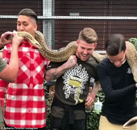 (Photos) Liverpool Trio, Philippe Coutinho, Roberto Firmino and Alberto Moreno Play with Huge Snake Following 3-2 Win Over Leicester