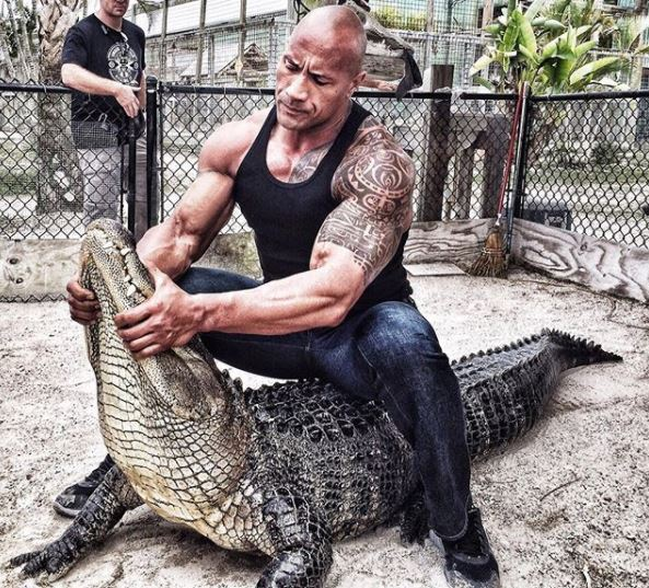 World Famous Actor 'The Rock' Spotted Wrestling A Dangerous Alligator In New Photo