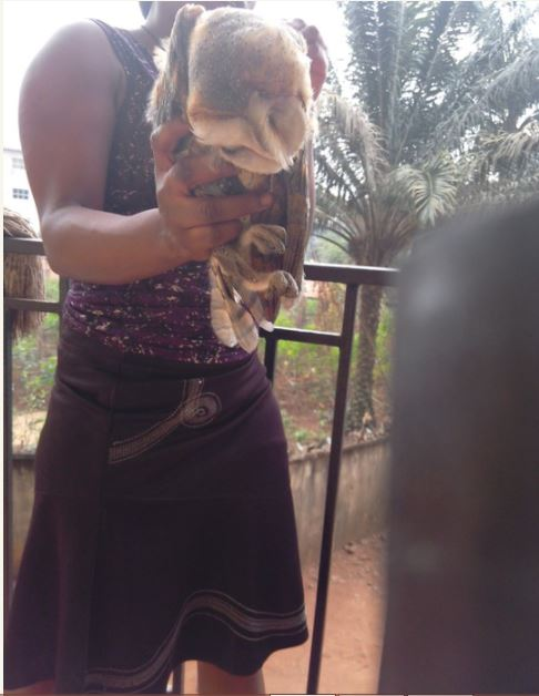 See the Strange Bird a Nigerian Girl Killed at Her House (Photos)