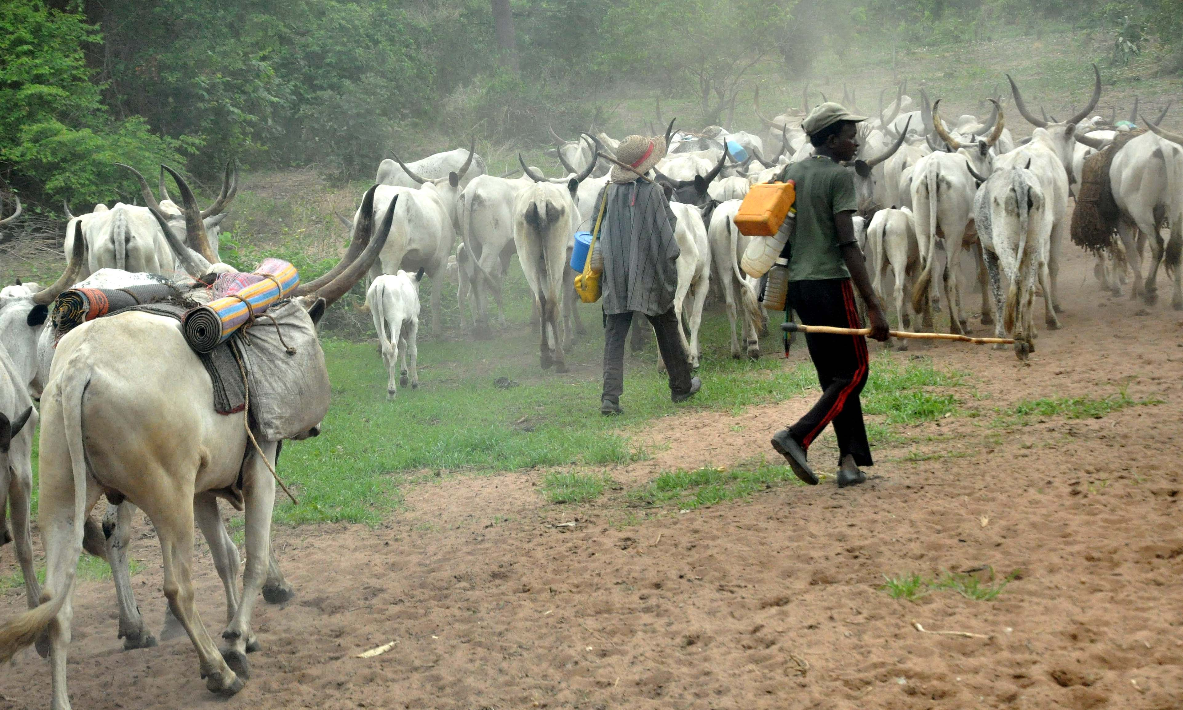 Fulani Herdsmen Strike, Burn Ex-Naval Chief`s Farms, Destroy Crops Worth Over N200m In Kwara