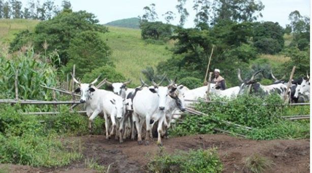 579 Nigerians In 4 States Killed In Farmer-herder Clashes
