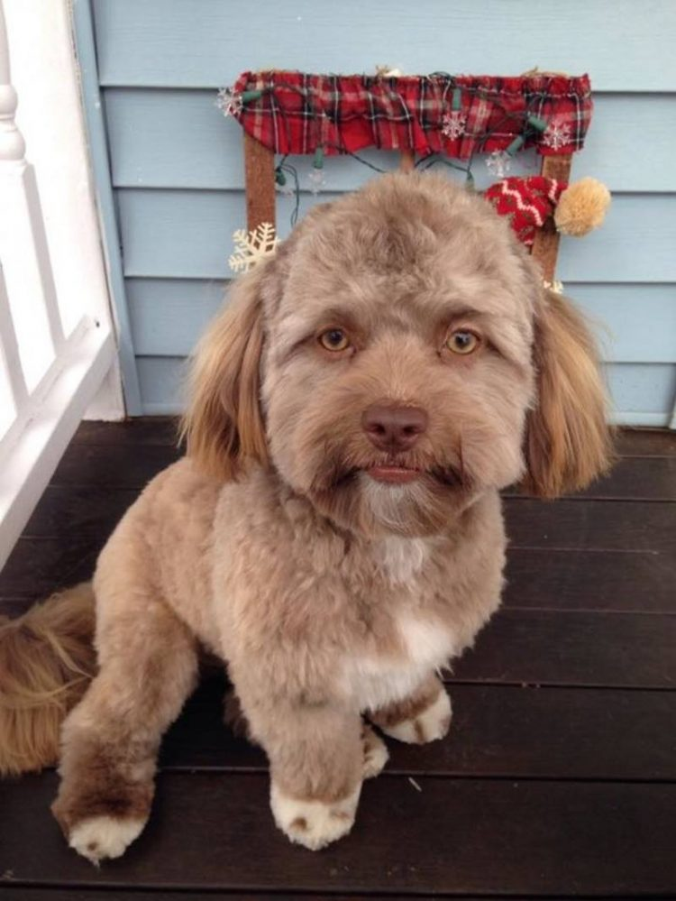 Photos: People Are Freaking Out Over This Dog With A Disturbingly Human Face