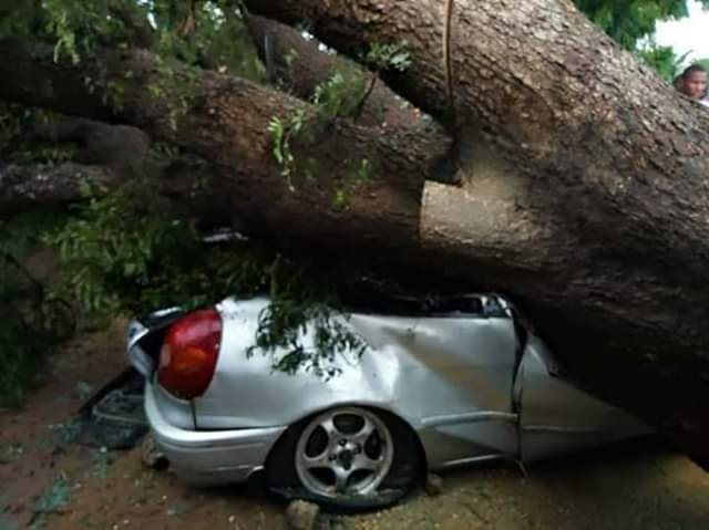 [Image: accident-tree-car-7.jpg]