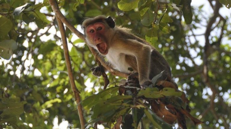 Horror As Monkeys Stone Man To Death In Broad Daylight