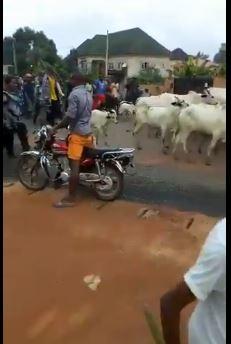 https://www.tori.ng/userfiles/image/2019/jul/01/cattle%20herd.JPG