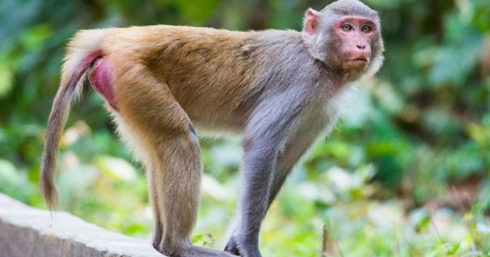 Monkeys Invade Osun Hospital's Trauma Centre 2