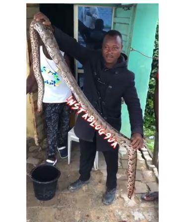 The big snake