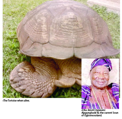 Alagba the oldest tortoise