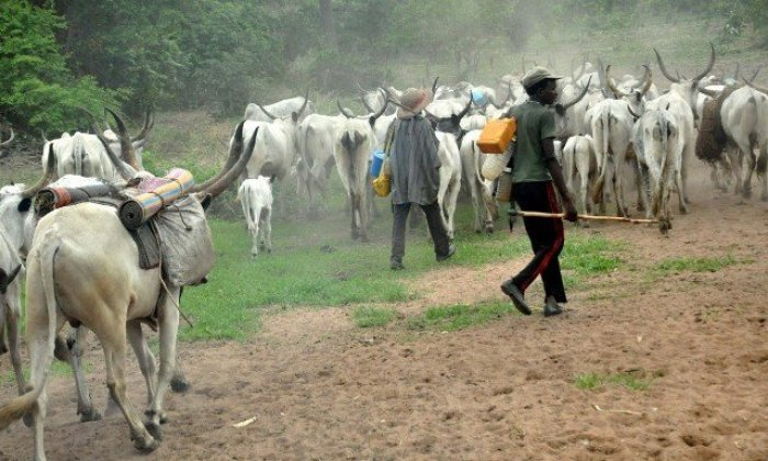 Herdsmen kill teachers