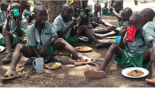 Bauchi, feeding