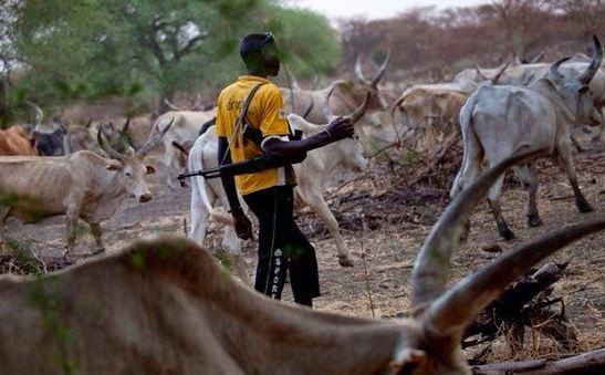 Herdsman, cattle