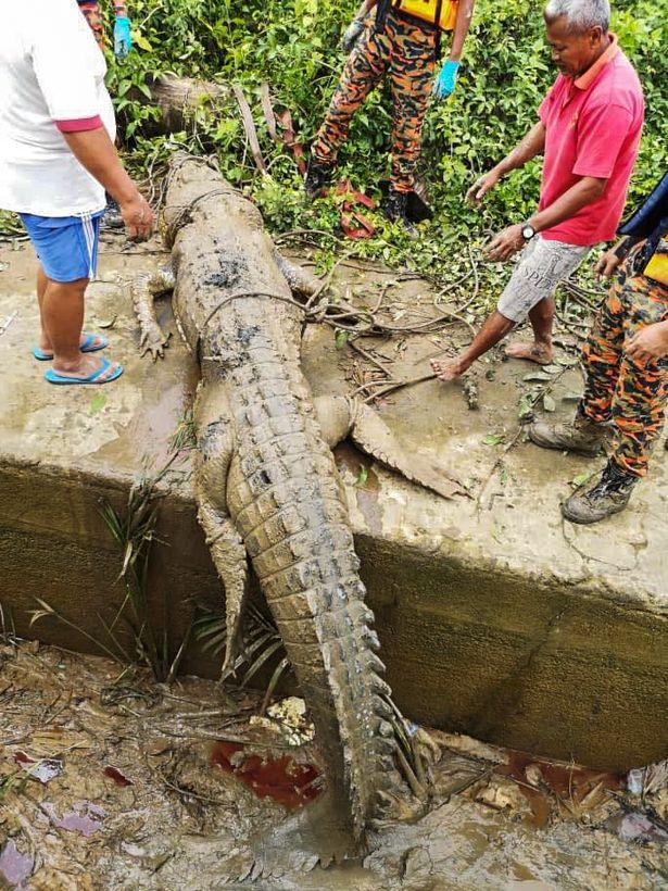 Ganya was found in the crocodile's stomach