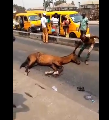 Tired horse collapses in Lagos