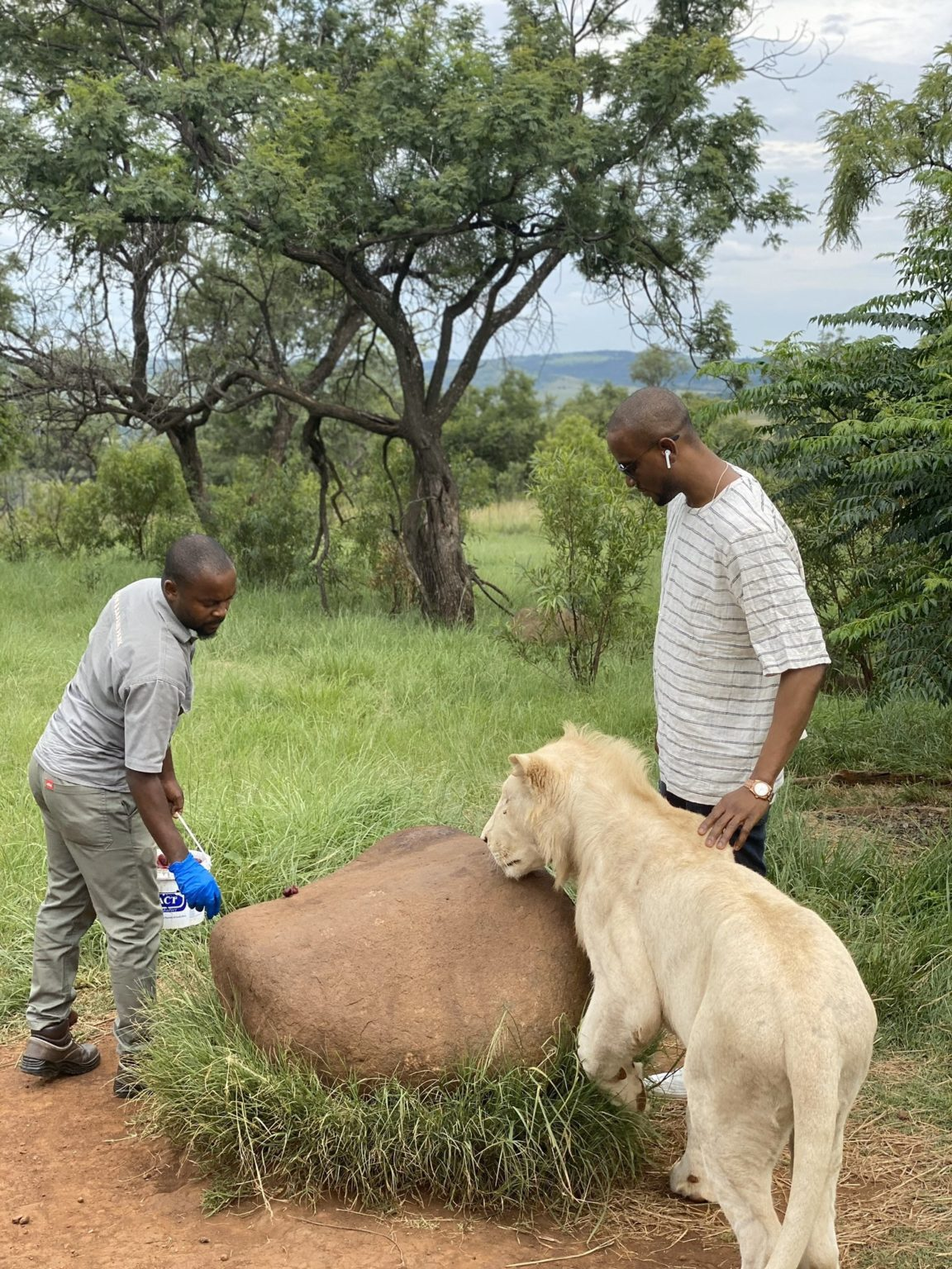 Omashola Kola Oburoh posing with lions