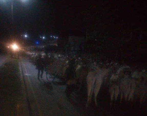 Night grazing