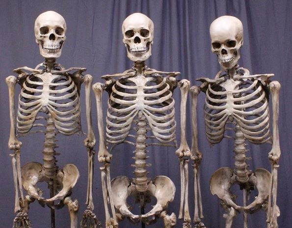 Skeletons found inside house