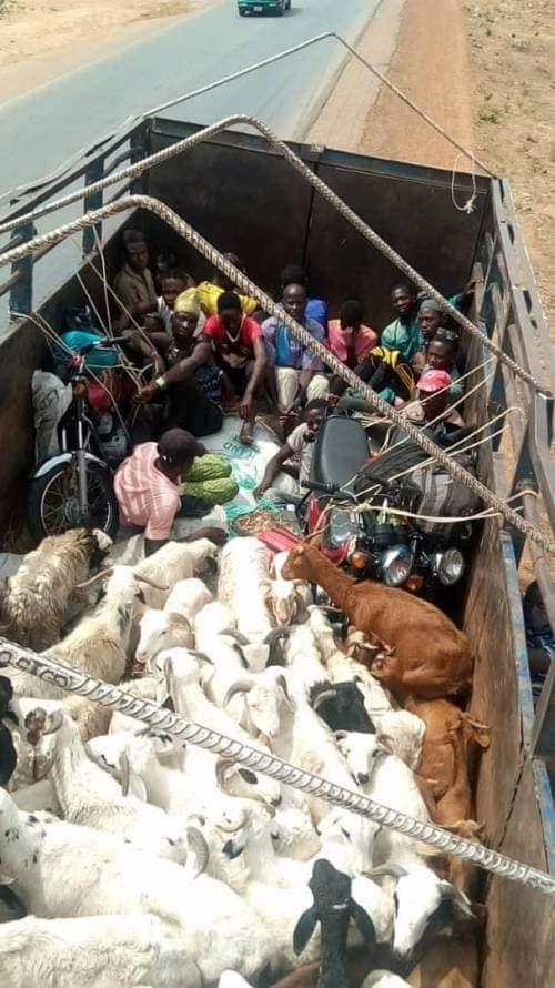 The passengers hidden among rams caught while trying to enter Kaduna