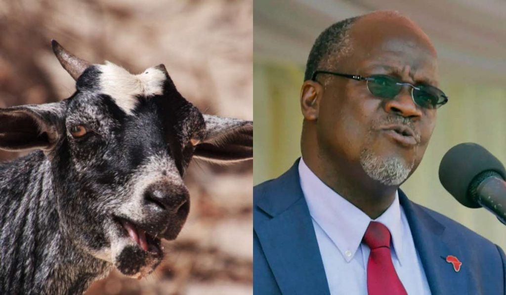 President Magufuli orders probe