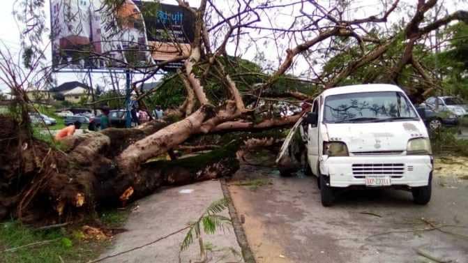 Tree falls on bus