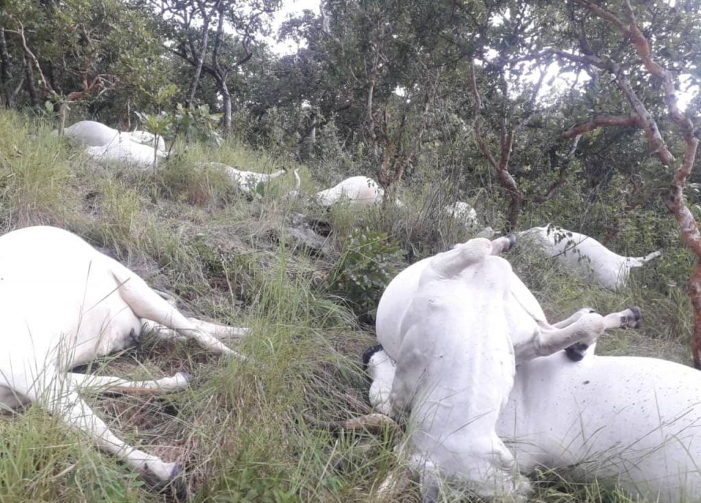 Cows killed by lightning in Ekiti state