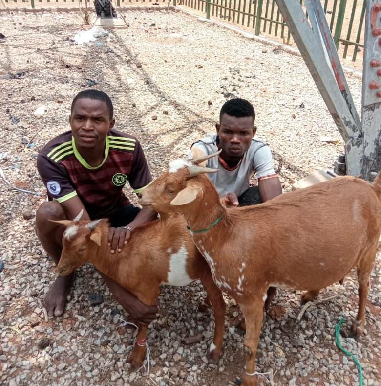 Goat thieves caught in Adamawa