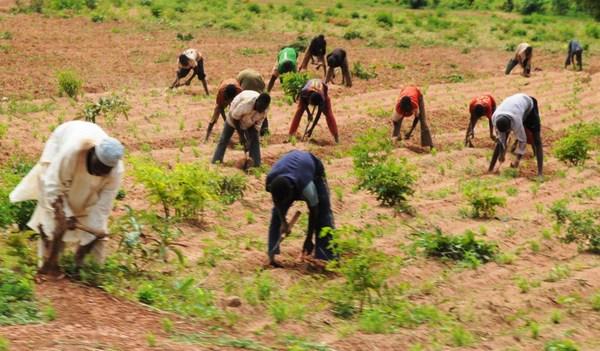 Ekiti farmer