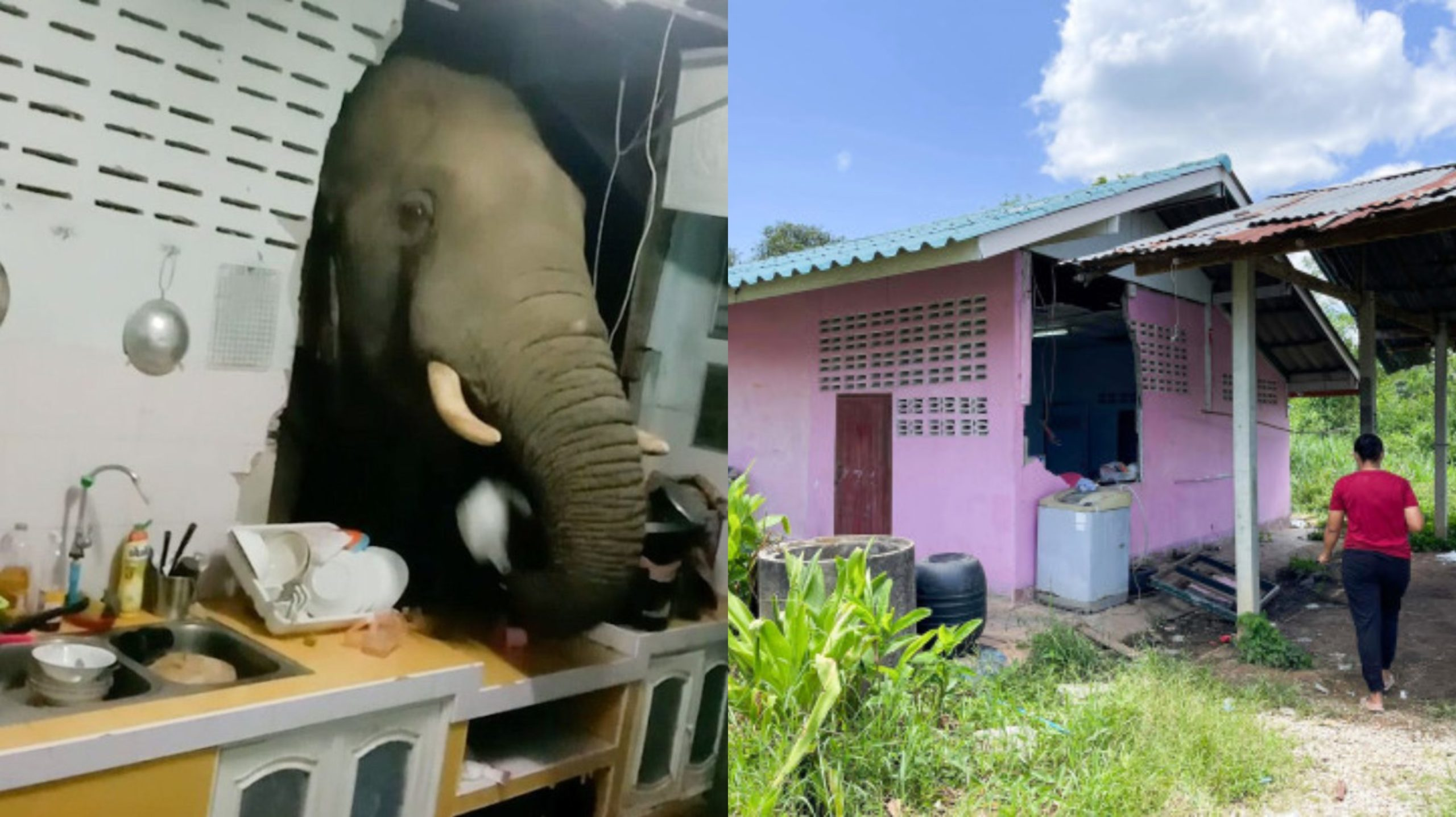 Elephant steals rice from house in Thailand