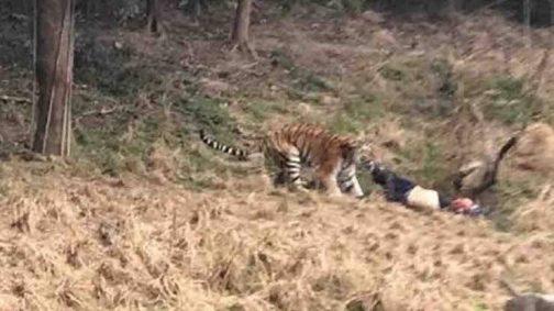 Tiger mauls zoo keeper to death