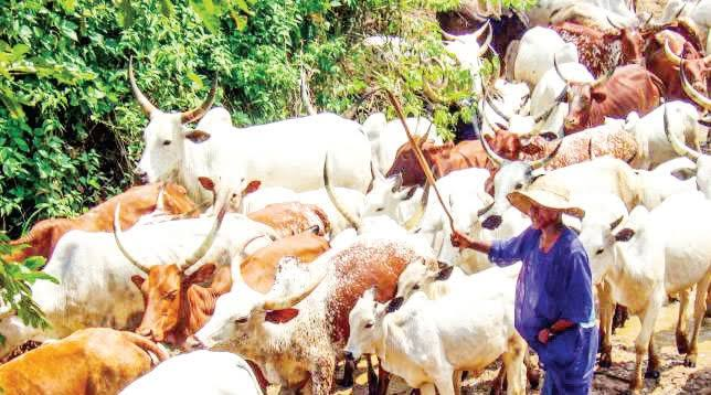 Buhari's Cow Routes Gazette Doesn't Exist, Grazing Ban Stays